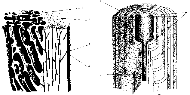 img1 3 строение кости