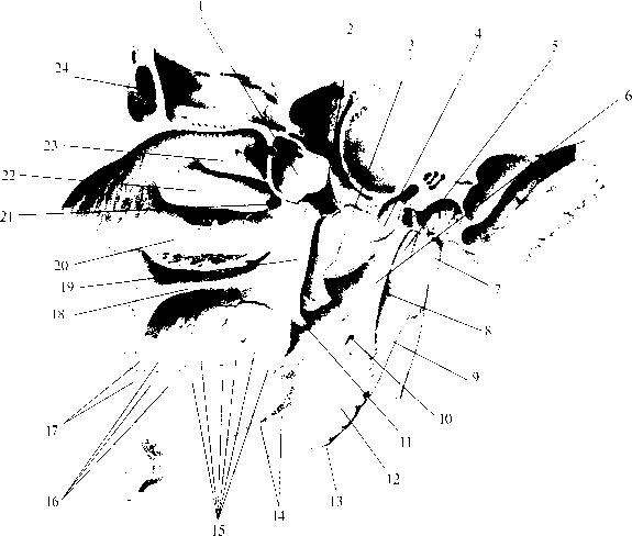 рис. img2-66