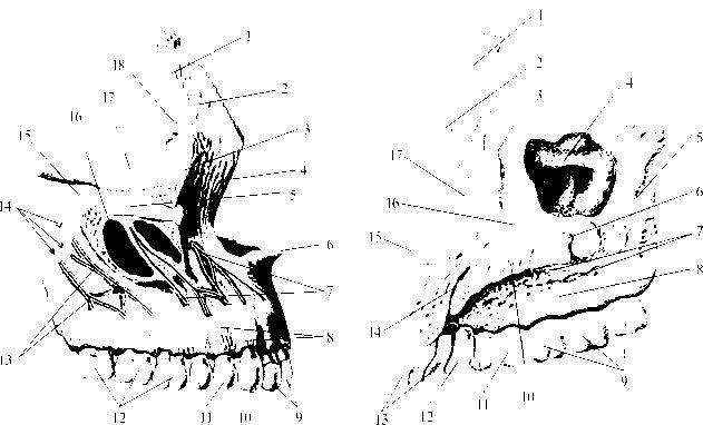 рис. img2-8